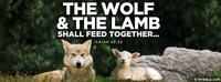 The wolf and the lamb shall feed together......