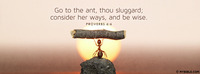 Go to the ant, thou sluggard; consider her...