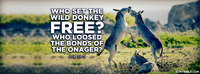 Who set the wild donkey free? Who loosed the...