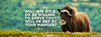 Will The Wild Ox Be Willing