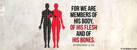 We Are Members Of Christ's Body.