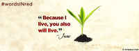 Because I Live, You Also Will Live.